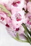 Ramo de gladiolos coloridos hermosos Imagenes de archivo