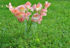Ramo de gladiolos rosados en un fondo verde Imagenes de archivo