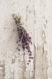 Ramo de hierbas del pulegium del mentha Foto de archivo libre de regalías