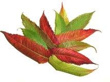 Ramo de hojas Imagen de archivo libre de regalías