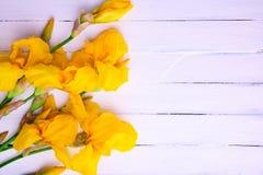 Ramo de iris amarillos en un fondo de madera blanco Fotos de archivo