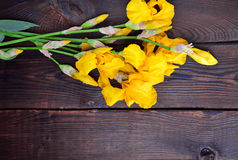 Ramo de iris florecientes amarillos Fotografía de archivo