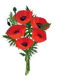 Ramo de la amapola de la flor. Imágenes de archivo libres de regalías