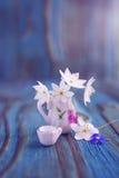 Ramo de la anémona, windflower en jarro miniatura, diminuto Fotos de archivo libres de regalías
