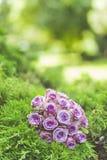 Ramo de la boda de rosas púrpuras que mienten en hierba Foto de archivo libre de regalías