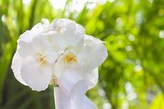 Ramo de la boda hecho de la orquídea blanca Foto de archivo libre de regalías