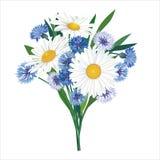 Ramo de la flor aislado Imagen de archivo