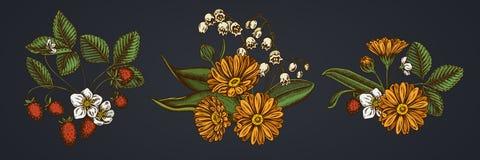 Ramo de la flor de calendula, lirio de los valles, fresa libre illustration