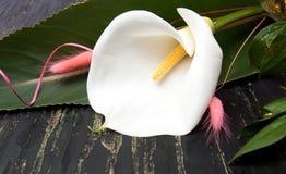 Ramo de la flor de la cala en una tabla Foto de archivo