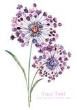 Ramo de la flor del ejemplo de la acuarela en fondo simple ilustración del vector