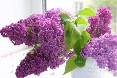 Ramo de la lila en un florero contra una ventana Imágenes de archivo libres de regalías