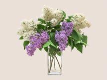 Ramo de la lila en un florero de cristal claro Imágenes de archivo libres de regalías