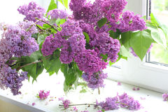 Ramo de la lila en un florero transparente contra una ventana Fotografía de archivo libre de regalías