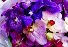 Ramo de la orquídea Fotografía de archivo libre de regalías