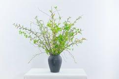 Ramo de la primavera con las ramitas verdes Foto de archivo libre de regalías