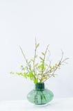 Ramo de la primavera con las ramitas verdes Fotos de archivo