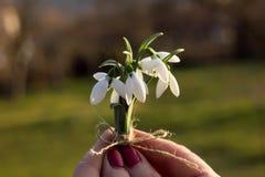 Ramo de la primavera con los snowdrops fotografía de archivo