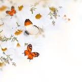 Ramo de la primavera de margaritas Fotos de archivo