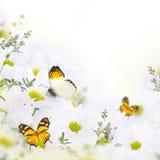 Ramo de la primavera de margaritas Imagenes de archivo