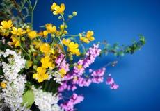 Ramo de la primavera en fondo azul Imágenes de archivo libres de regalías