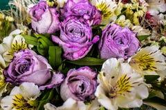 Ramo de la rosa de la púrpura con la flor blanca alrededor Fotografía de archivo