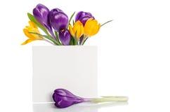 Ramo de las flores del azafrán en florero Imagen de archivo