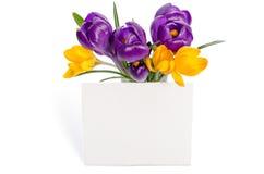 Ramo de las flores del azafrán en florero Fotografía de archivo