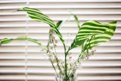 ramo de las flores del lirio de los valles en el fondo de persianas fotografía de archivo