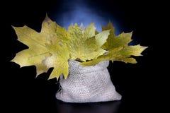 Ramo de las hojas de otoño en un saco de lino Fotografía de archivo libre de regalías