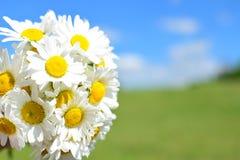 Ramo de las margaritas y prado del verano en fondo fotos de archivo