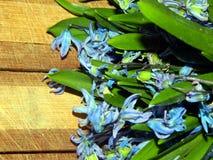 Ramo de las primeras flores de la primavera de snowdrops apacibles Fotos de archivo libres de regalías