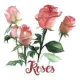 Ramo de las rosas Imagen de archivo