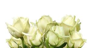 Ramo de las rosas imagenes de archivo