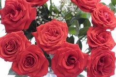 Ramo de las rosas rojas con la respiración de Babys Imagenes de archivo