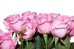 Ramo de las rosas rosadas foto de archivo