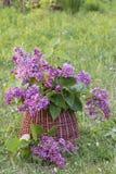 Ramo de lila Imagenes de archivo
