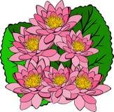 Ramo de lirios de agua y de hojas rosados del verde Foto de archivo