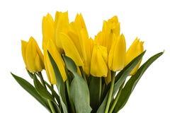 Ramo de los tulipanes amarillos, aislados en el fondo blanco Fotografía de archivo libre de regalías