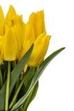 Ramo de los tulipanes amarillos, aislados en el fondo blanco Fotos de archivo libres de regalías