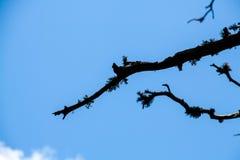 Ramo de madeira seco Fotografia de Stock Royalty Free