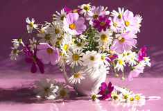 Ramo de manzanilla de las flores Fotografía de archivo