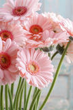 Ramo de margaritas rosadas del gerbera Imagen de archivo