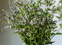 Ramo de menta fresca con las flores fotos de archivo