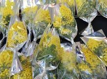 Ramo de mimosas amarillas frescas listas para ser dado lejos a las mujeres Fotos de archivo