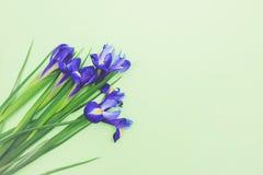 Ramo de narcisos azules frescos en fondo verde claro Fotos de archivo libres de regalías
