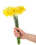Ramo de narcissuses amarillos en la mano femenina Fotografía de archivo libre de regalías
