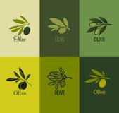 Ramo de oliveira. Grupo de etiquetas. Ilustração do vetor Fotografia de Stock Royalty Free