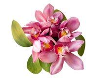 Orquídea rosada aislada en el fondo blanco Fotos de archivo libres de regalías