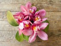 Orquídea rosada en fondo de madera Fotografía de archivo libre de regalías