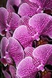 Ramo de orquídeas imagen de archivo libre de regalías